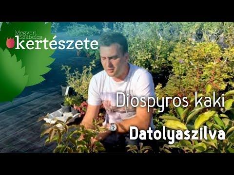 paraziták datolyaszilva