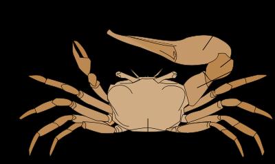 rákfélék parazita nevei