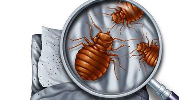 paraziták nélküli párnák)