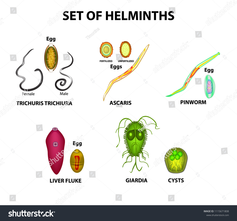 pinworms ascaris lamblia)