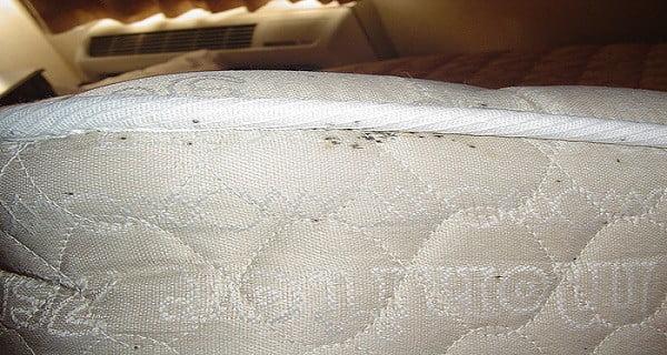 hogyan kell kezelni a matracot parazitáktól)