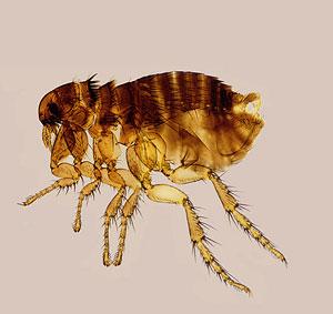 Paraziták és élősködők elleni védekezés
