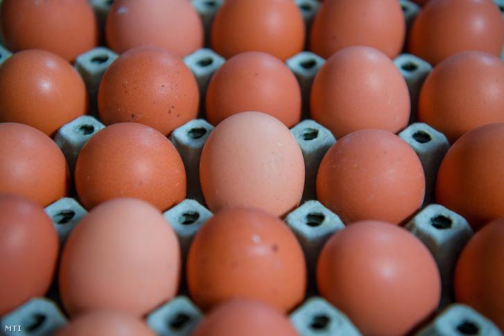 tojásokat körömféreg borítja