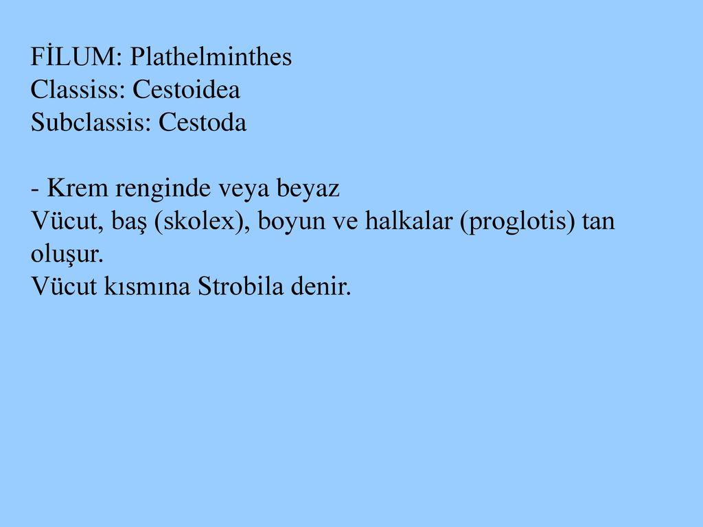 a helmintus csoport képviselői)