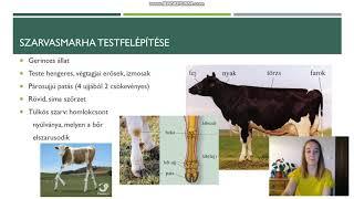 szarvasmarha galandféreg lokalizációja az emberekben)