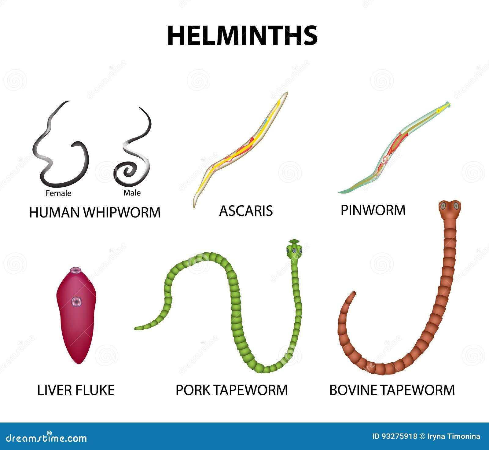 pinworms ascaris lamblia