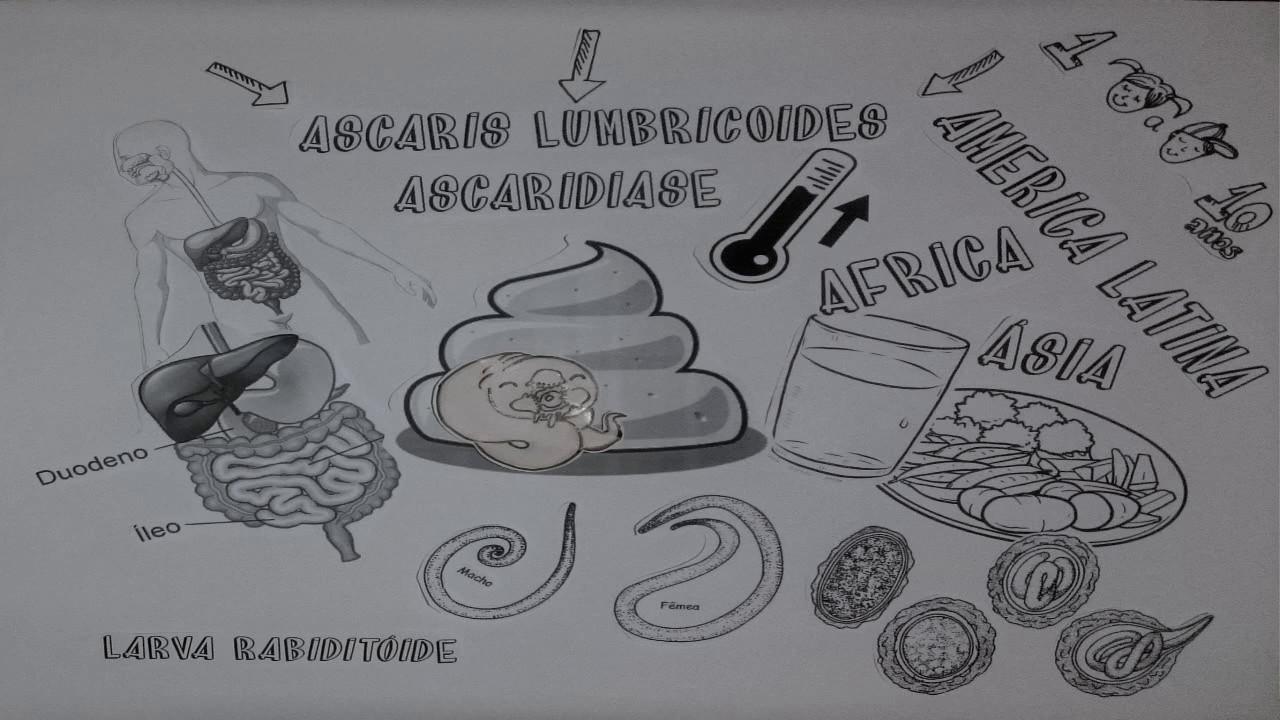 Ascaris tabletta embereknek. Ascaris parazita tabletta