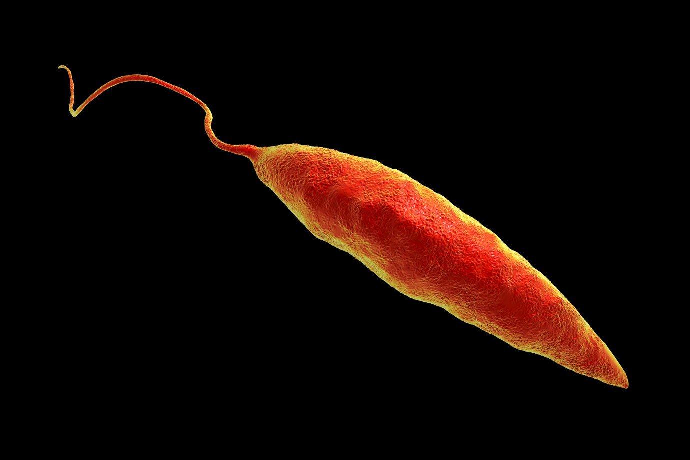 Kisállatorvos - Egzotikus betegségek, melyek már nem is annyira egzotikusak