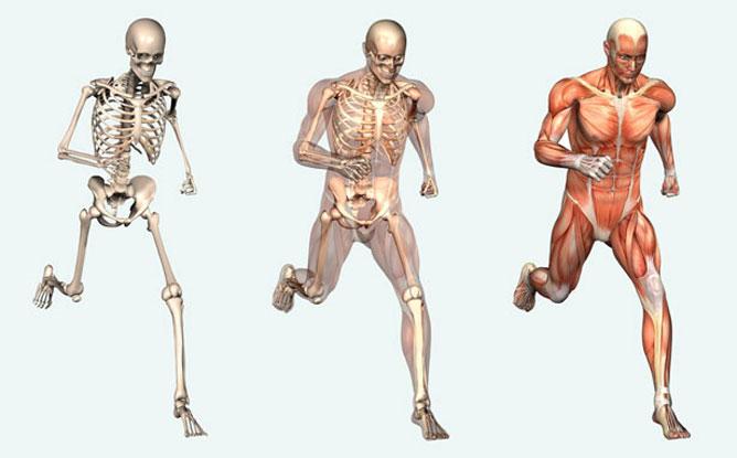 csúcsparaziták az emberi testben