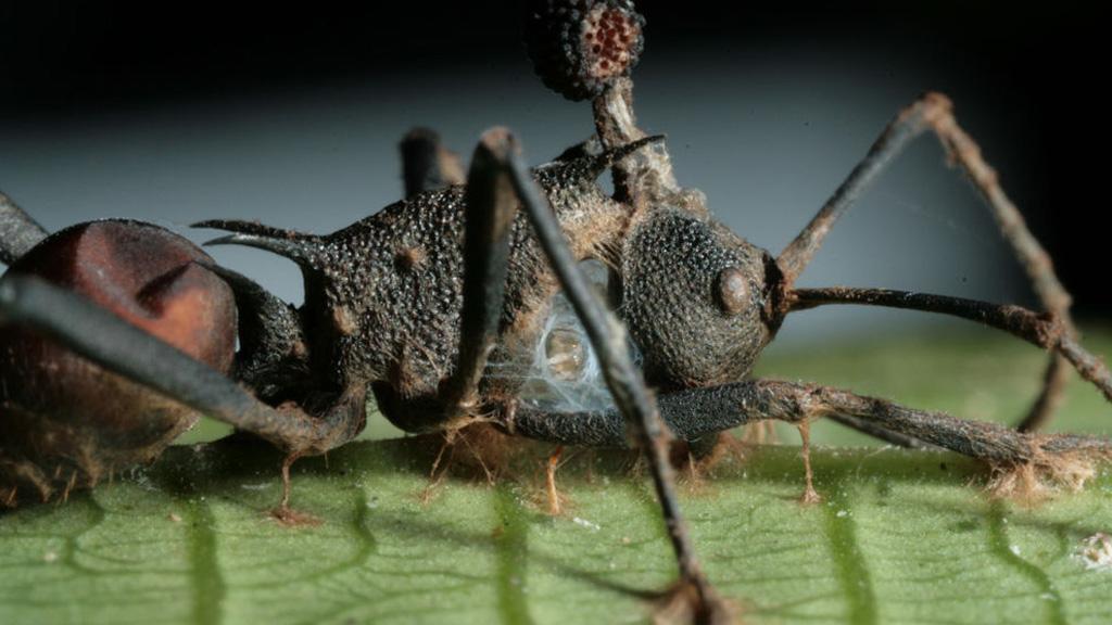 gyógyszerek a helminták parazitáihoz a helminták tünetei az emberi belekben