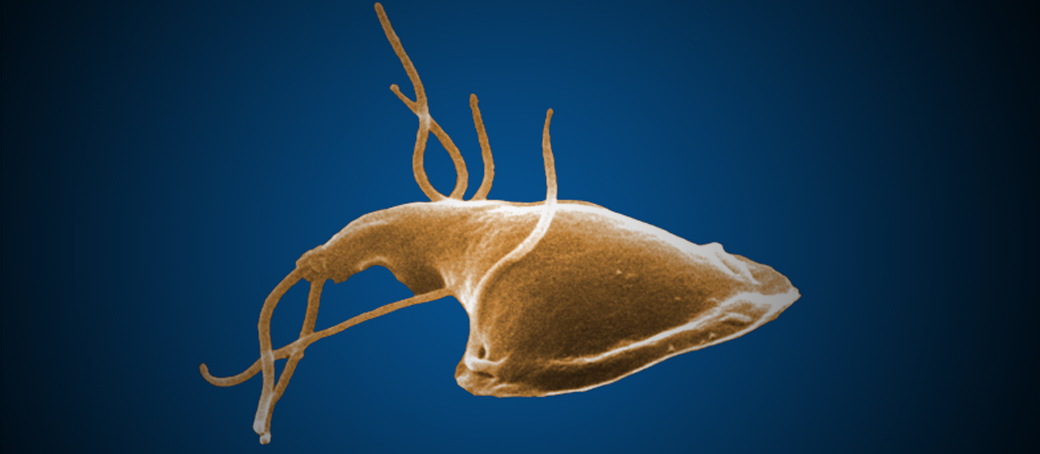 giardia paraziták, hogy néznek ki