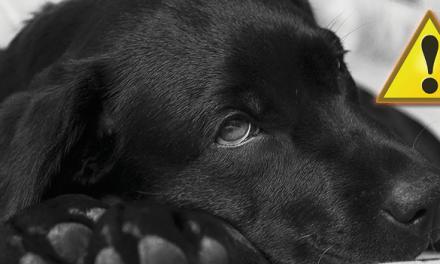 Büdös a kutyám lehelete - mit tegyek?