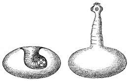 A pinwormok újbóli kezelése Pinworm: tünetek és kezelés - Pinworms férfiaknál tünetek