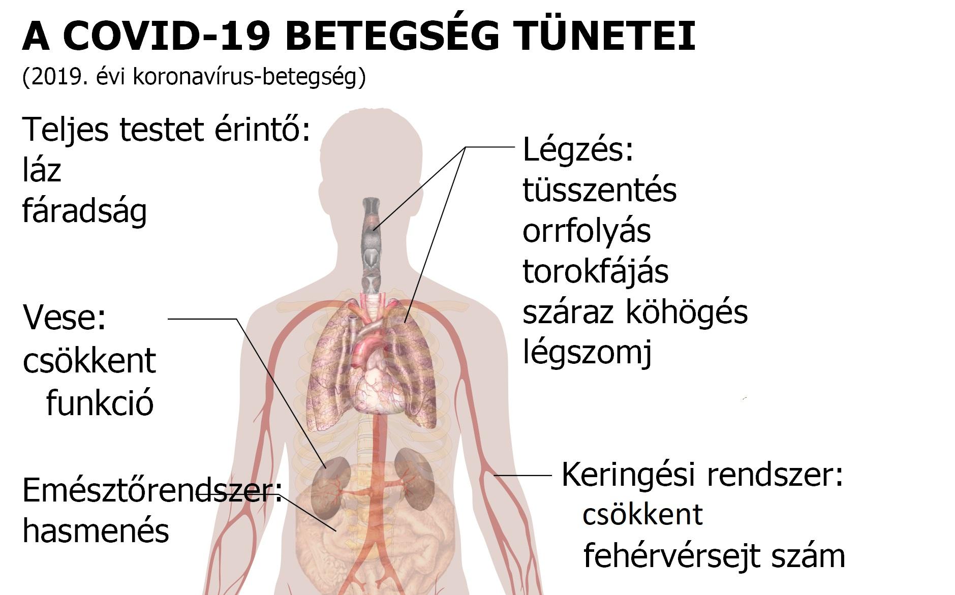 a paraziták fő tünetei az emberi testben