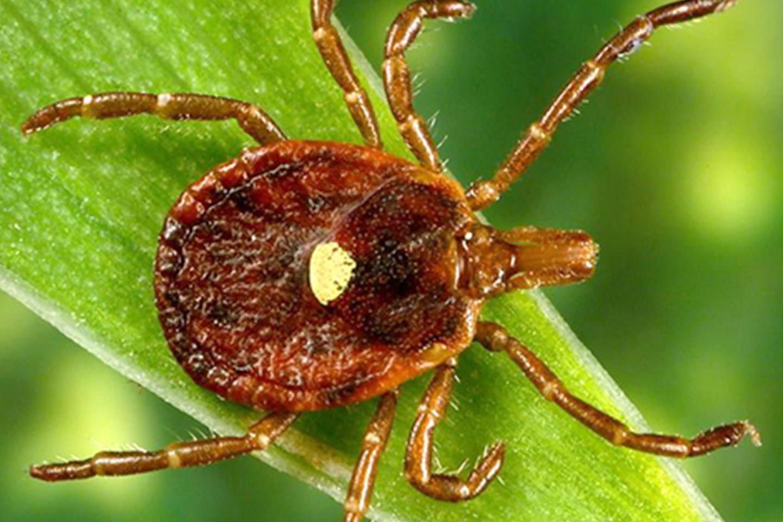 Paraziták az emberi hólyagban, hogyan kell kezelni - Tartalomjegyzék