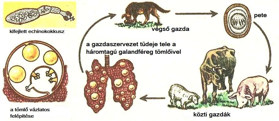 a féreg a legveszélyesebb parazita)