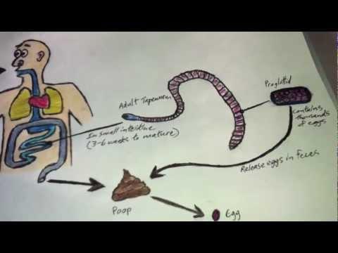 képzési kézikönyv a parazitákról)