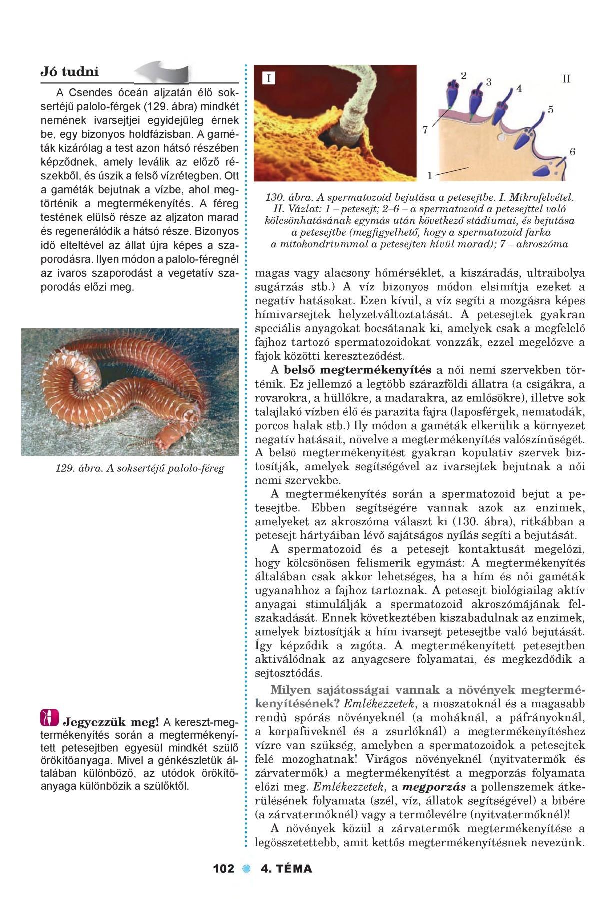 paraziták nagy petesejtjei