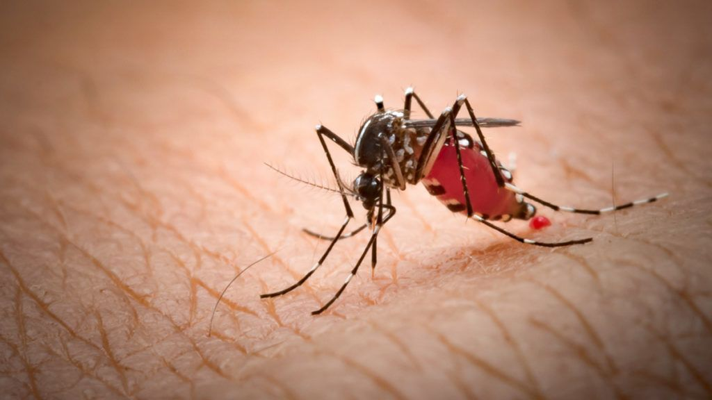 paraziták, amelyek képesek kontrollálni az embert)