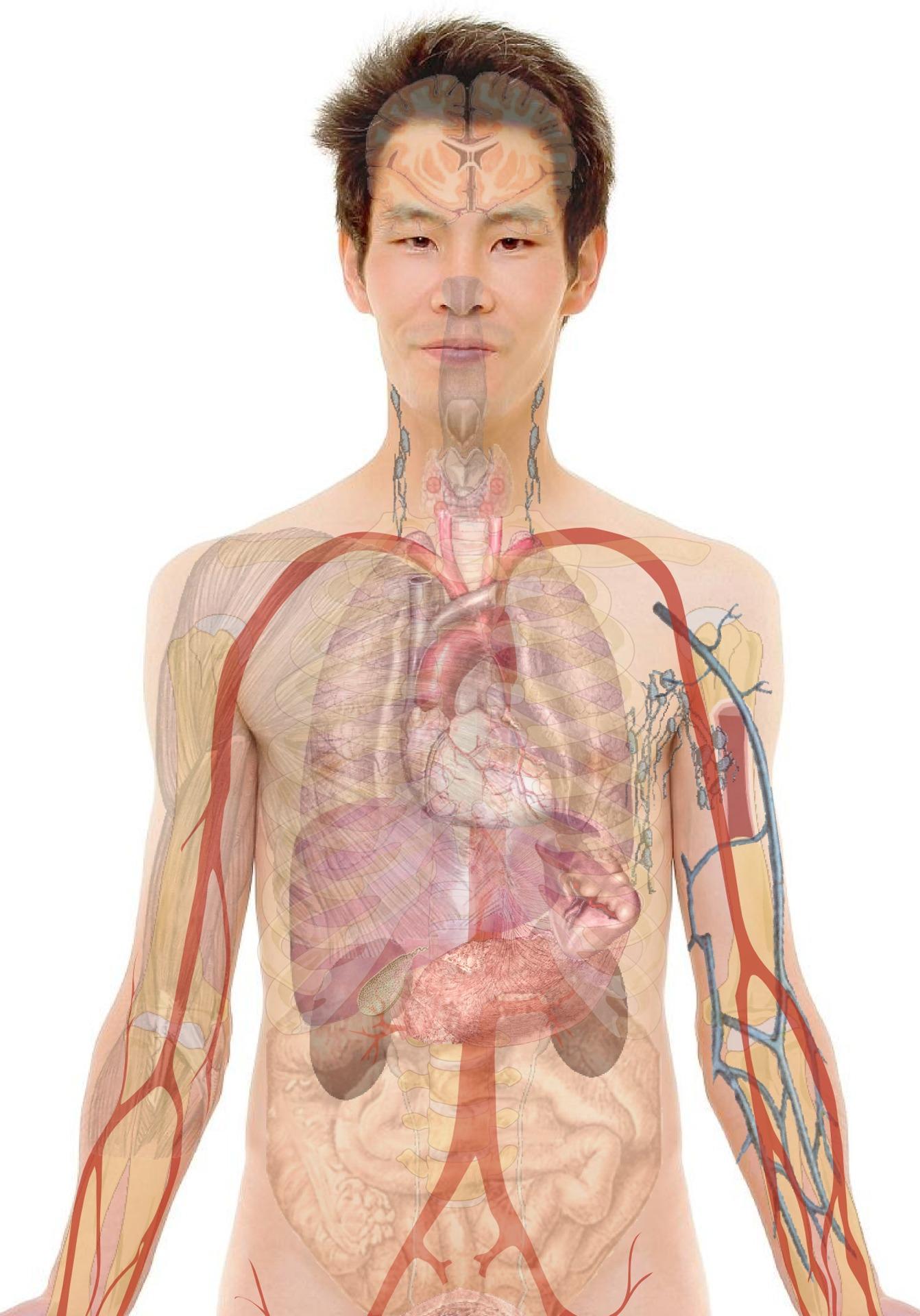 Parazita az emberben | Leggyakoribbak, tüneteik, kiűzésük