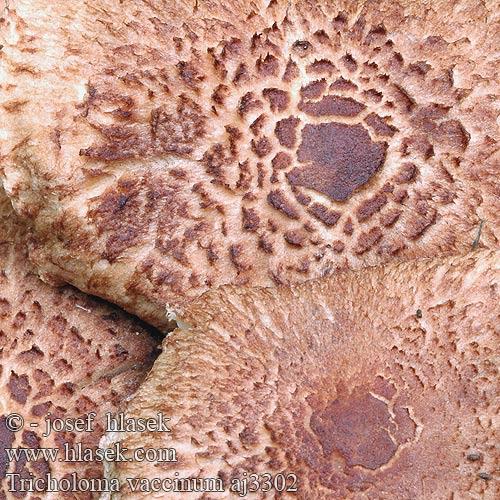 Pinworms tojás képek. Férgek típusai és tünetei