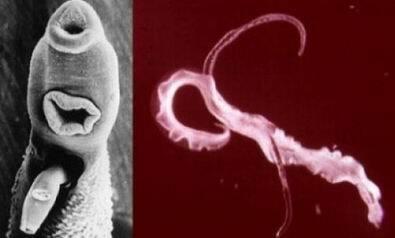 paraziták mit isznak belőlük
