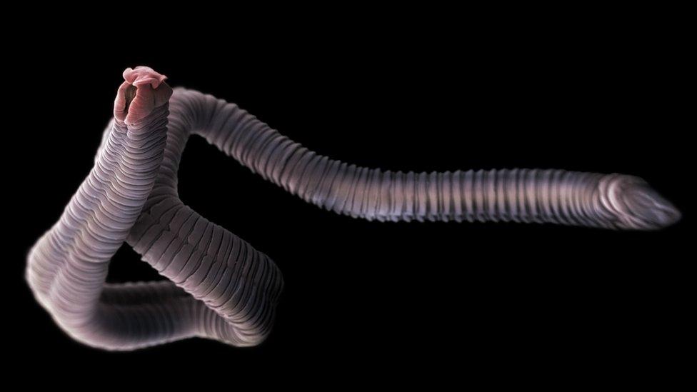 A giardiasis helmintus