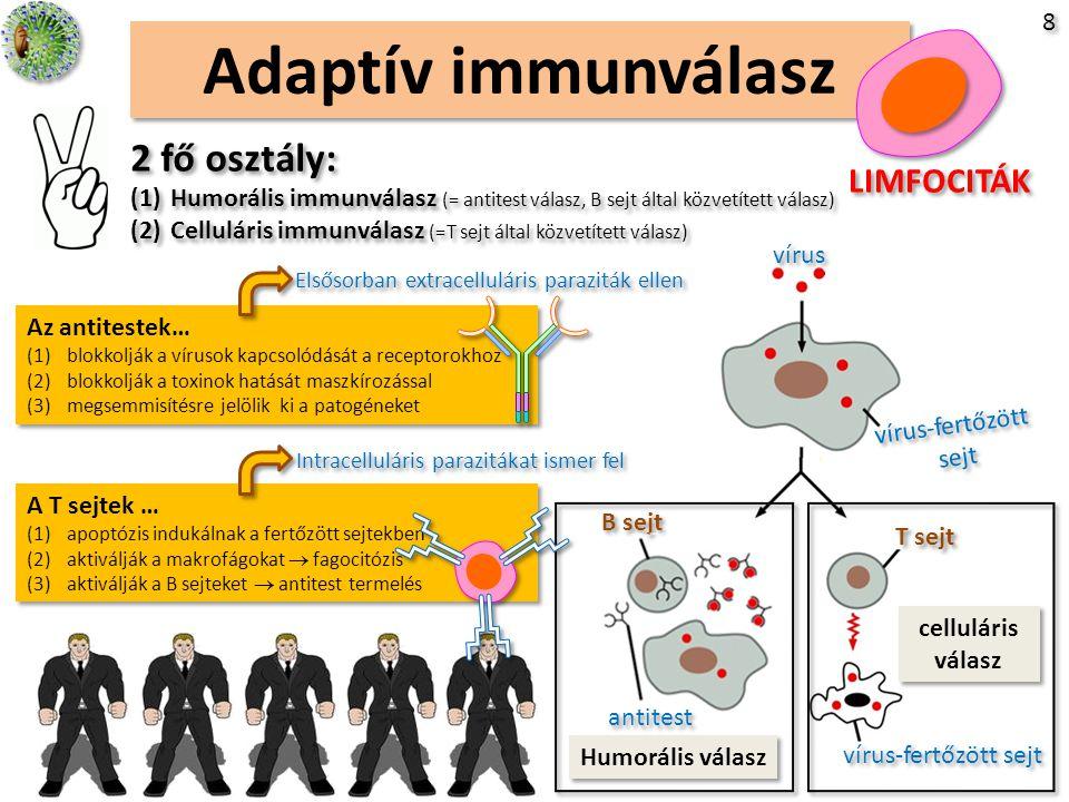 Limfociták és paraziták Hányinger parazitákkal a testben