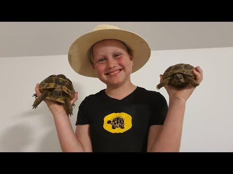 Kagyló fojtja meg a teknősöket - prohormones.hu