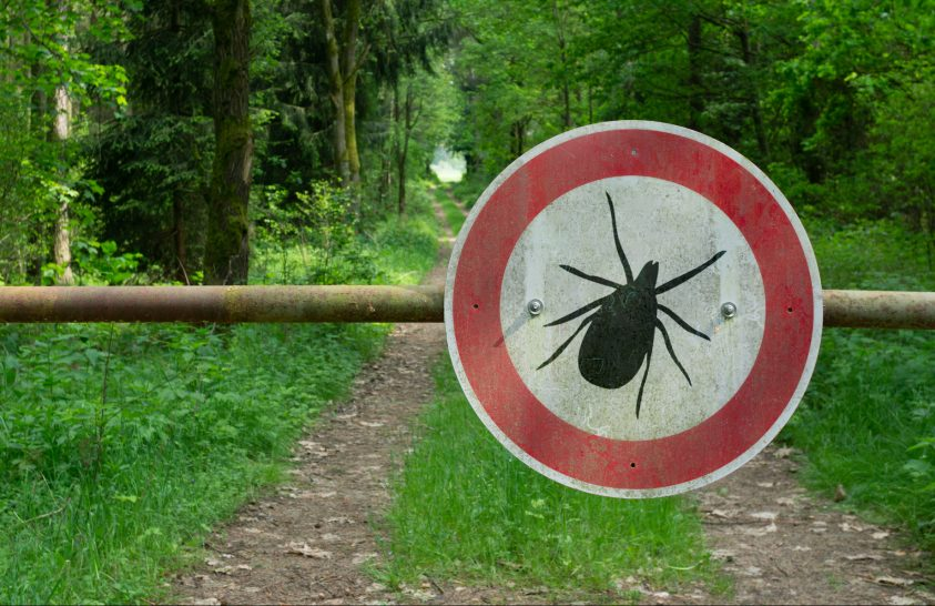 paraziták, például koelenterátumok