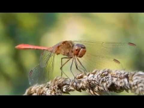 ostorféreg, ahol lakik paraziták a testben, hogyan lehet kideríteni