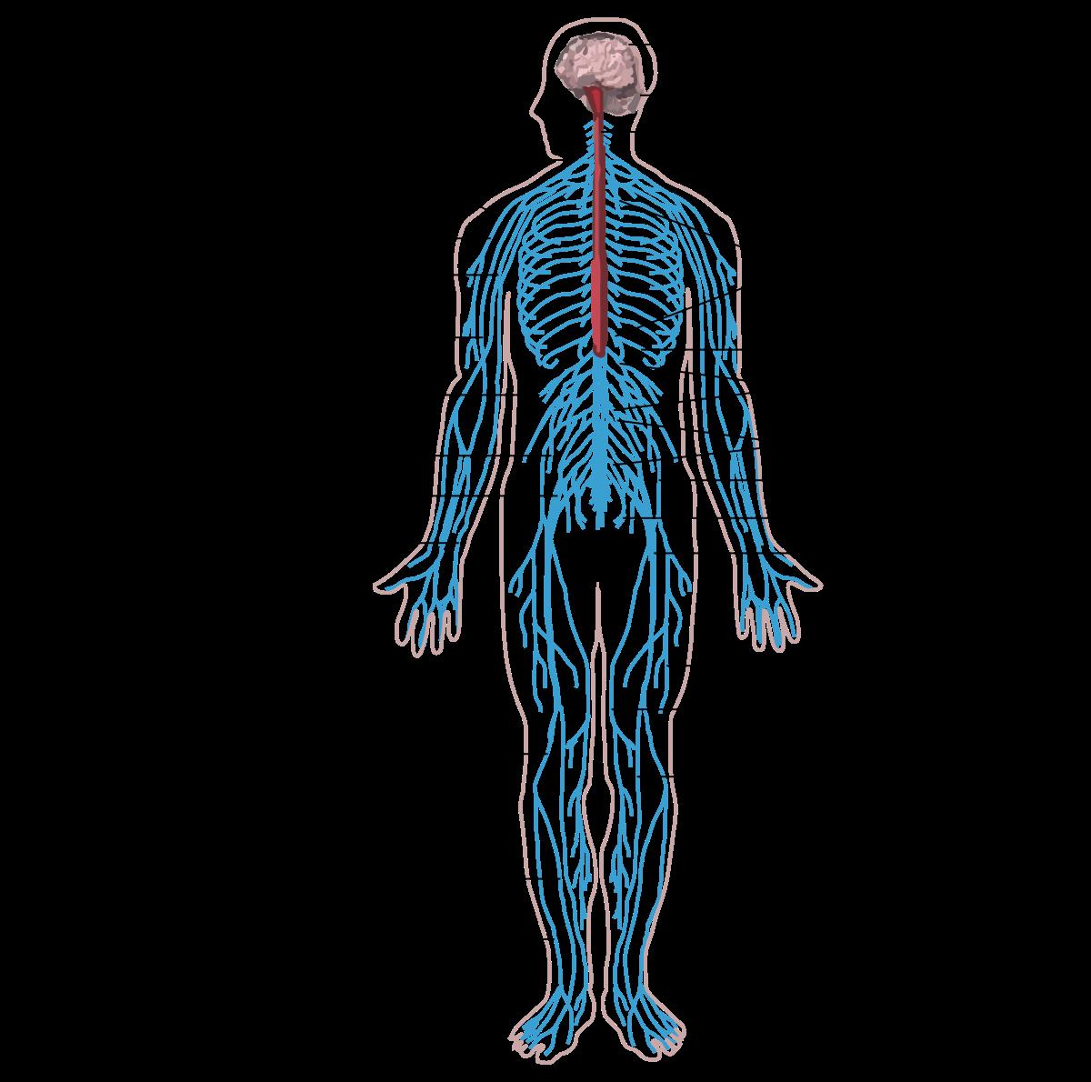 paraziták az emberi testben a küzdelem módszereiben hogyan érzi a leheletét