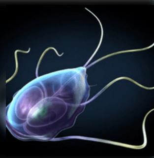 Paraziták a testben milyen tüneteket adnak és honnan jönnek