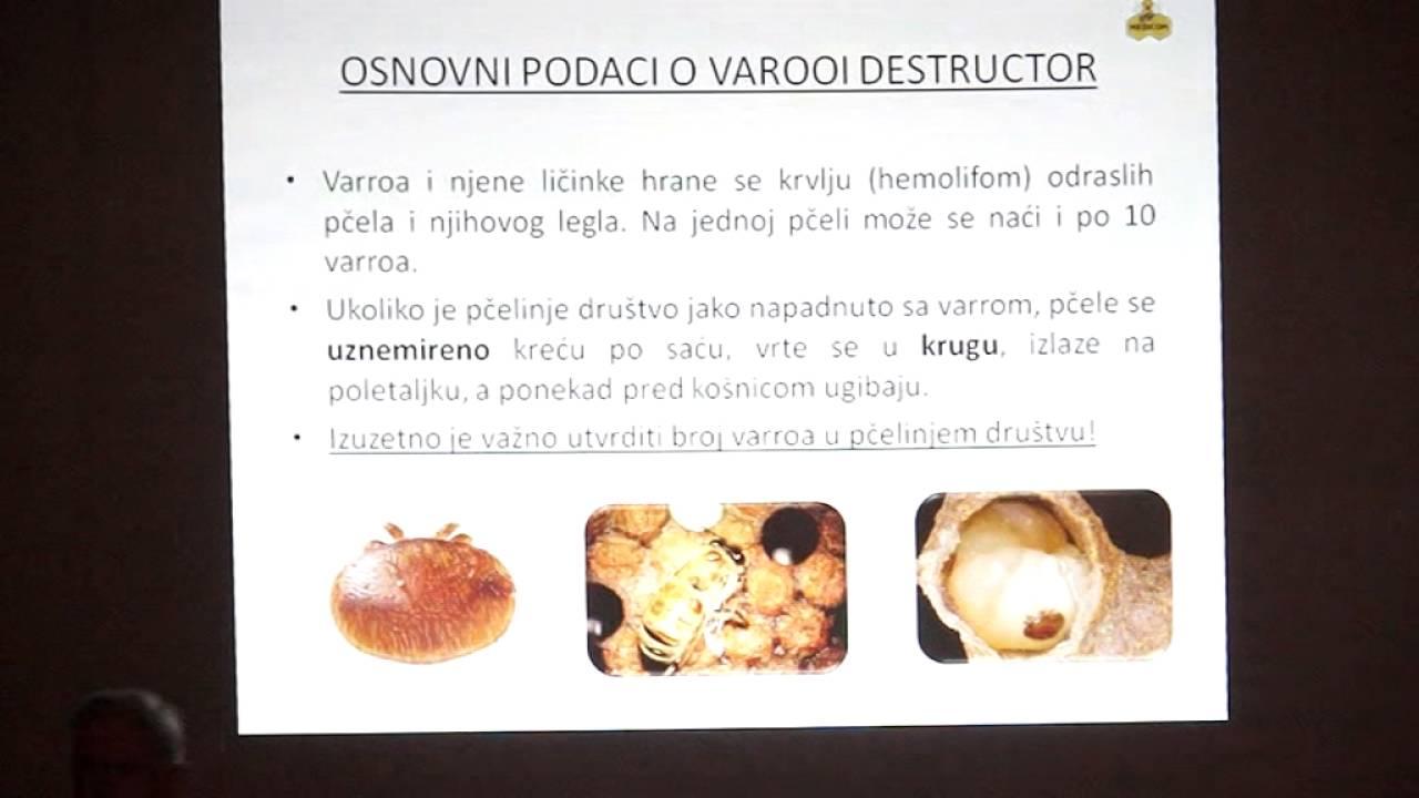 öntöző rossz lehelet)