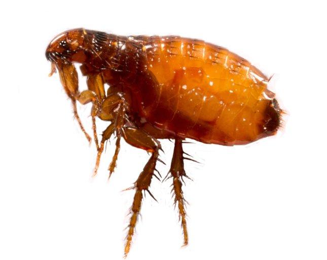 a hozzájuk tartozó paraziták