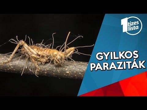 paraziták és gömbférgek)