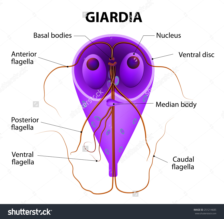 giardiasis kímélő kezelés)