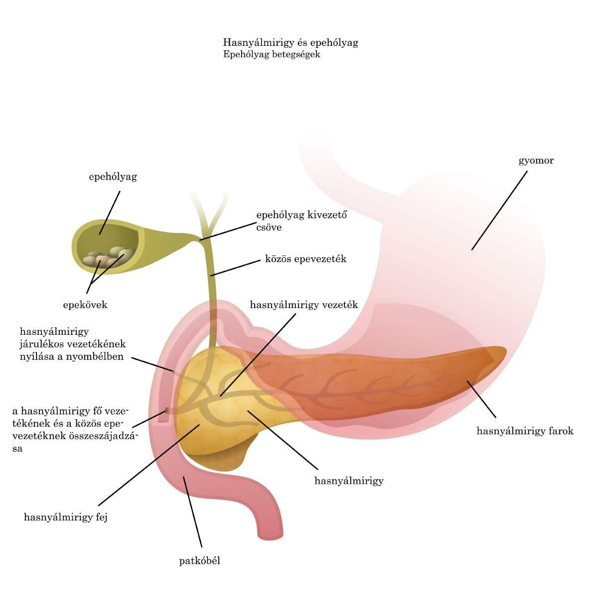 paraziták az epehólyag tüneteinek diagnózisában