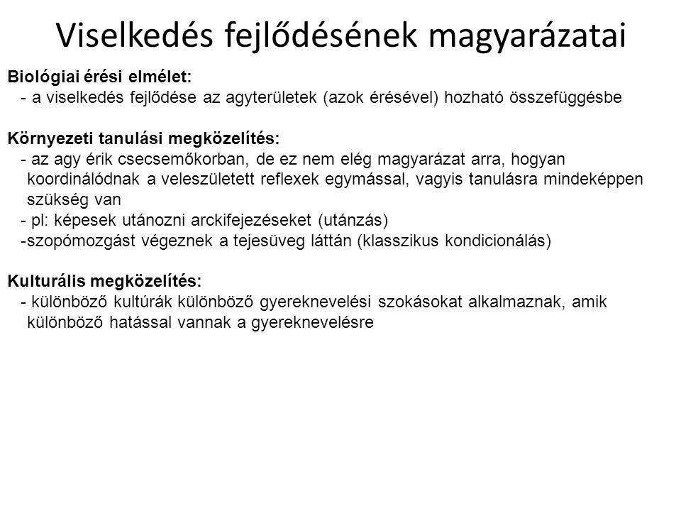 az emberi gömbfejlődés fejlődési szakaszai)