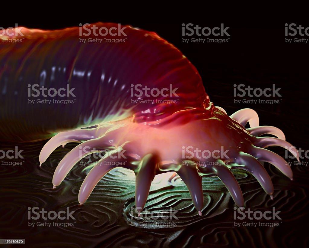 széna bacillus parazita