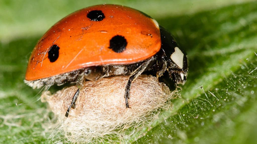 ölje meg a parazitákat a gyomorban makréla paraziták