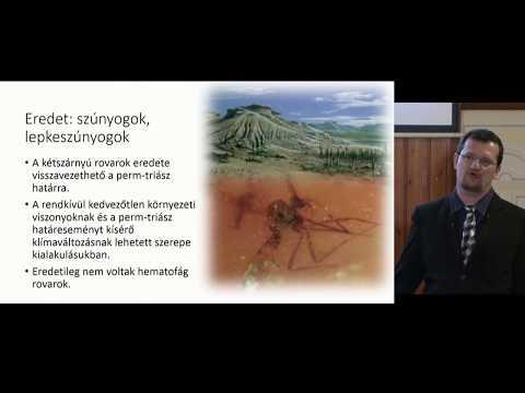 Saury konzerv paraziták, A forgalmazás és a megnevezés