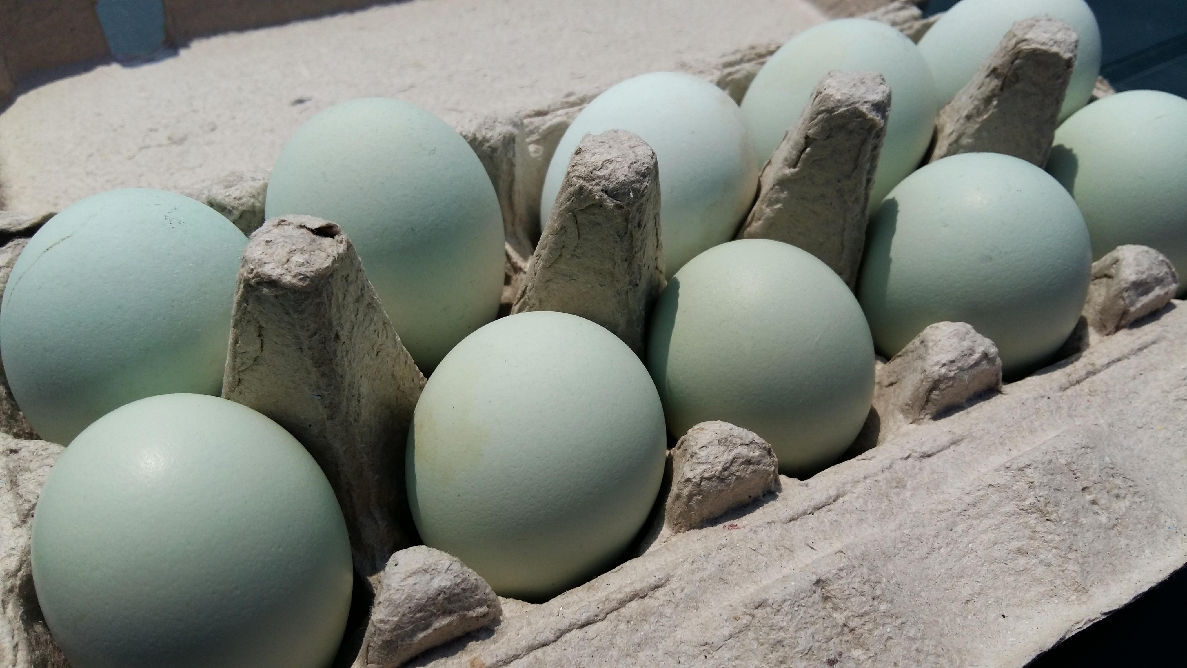 hány körömféreg- tojás él)