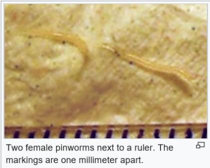 pinworms és enuresis)