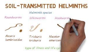 helminthiasis hatékony kezelés