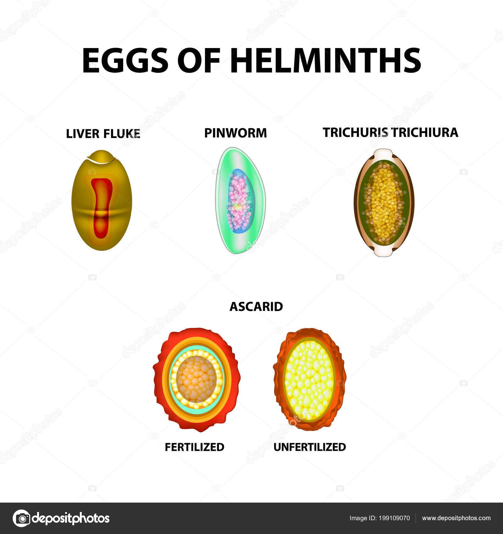 Ascaris tojások mit)