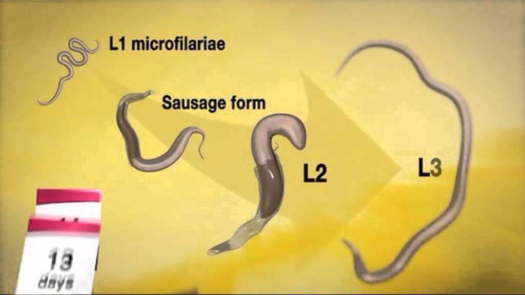 fagyasztó paraziták