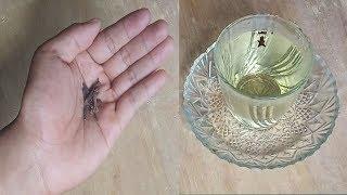 a pinwormok okai)