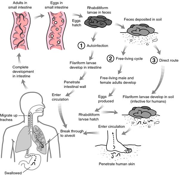 strongyloidosis cestodosis)