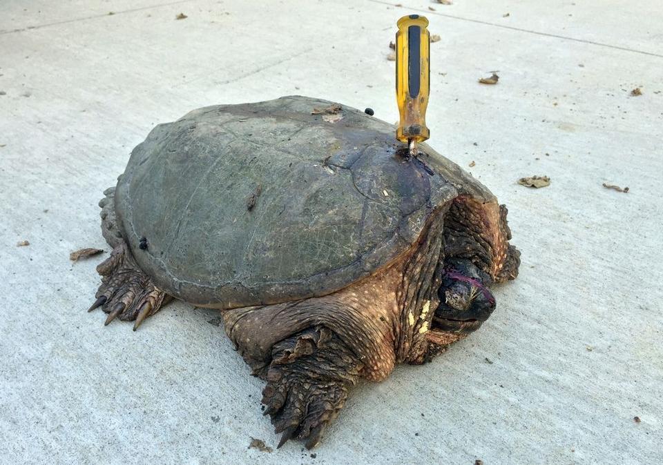 AQUA-FOOD vitacombi teknős páncélerősítő vitamin 10 ml - Vit